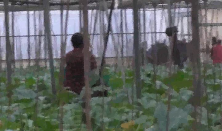 """Vendevano a disperati per 4mila euro la """"speranza"""" di rimanere in Italia, 5 denunciati"""