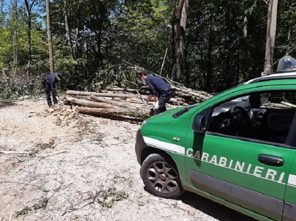 Picinisco – Taglio boschivo abusivo nel versante laziale del Parco, carabinieri forestali denunciano responsabile