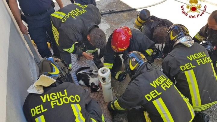 Cani e gatti intossicati durante incendio appartamento, i pompieri li salvano con i respiratori