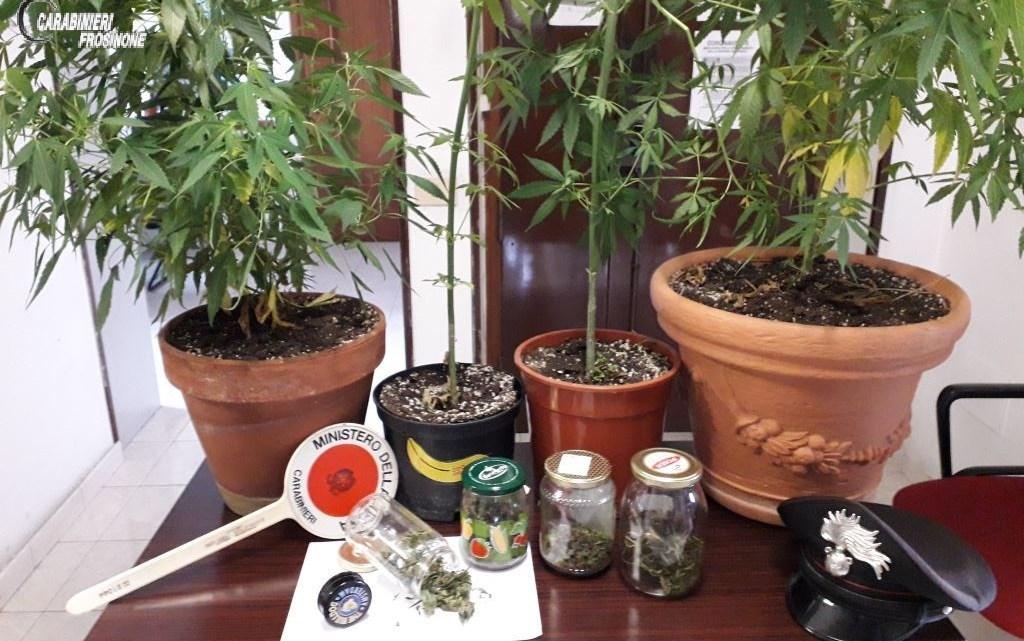 Castelliri – Scoperto dai carabinieri con 4 piante di cannabis, 31enne denunciato