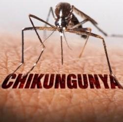 Stop trasfusioni all'ASL 2 di Roma, pericolo Chikungunya