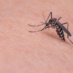 Le zanzare non pungono a caso
