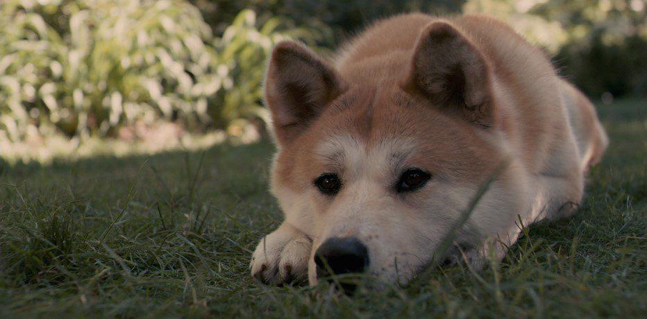 """La teoria dell'attaccamento: una dimostrazione della stessa nel film """"Hachiko-Il mio migliore amico"""""""