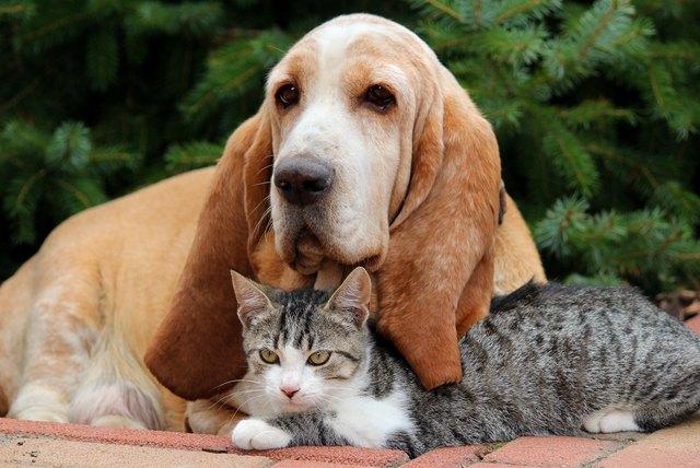 Non abbandoniamo gli animali: il rispetto che si meritano spiegato da Feuerbach