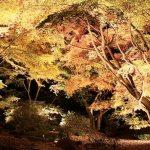 Que los árboles iluminen las ciudades