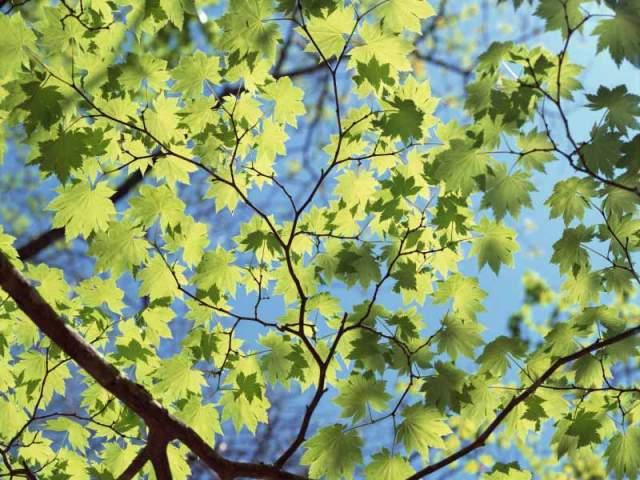 arboles con hojas verdes
