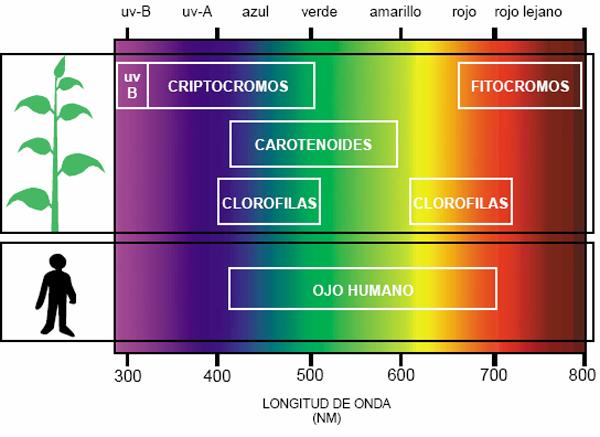 clorofilas-fotosin