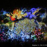 FILUX, apreciar la luz en el contexto del Centro Histórico