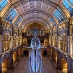 """Un """"glorioso renacimiento"""" para el Museo de Historia Natural de Londres"""