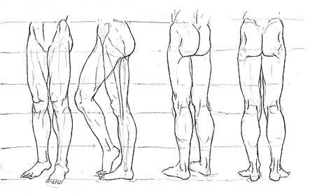 musculos de las piernas.