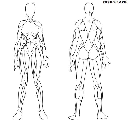 Cómo dibujar los músculos? (Manga)   IlustraIdeas