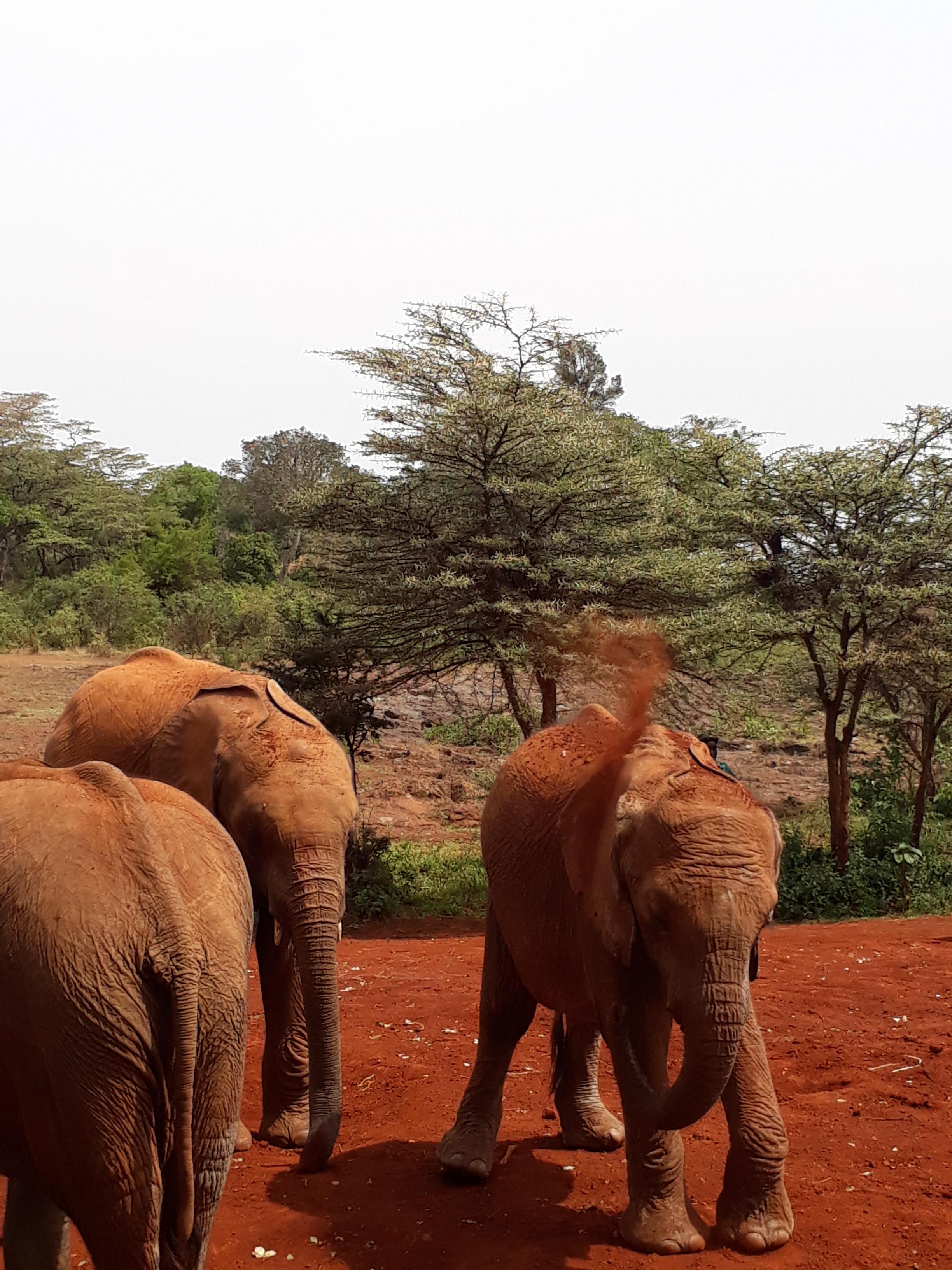 Africa Safariland Tours