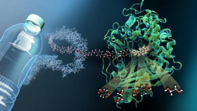 Rappresentazione grafica di uno dei due enzimi che degradano il Pet, il Mhetase