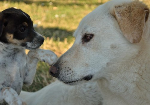 cani, zecche italia