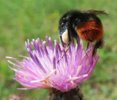 api stressate