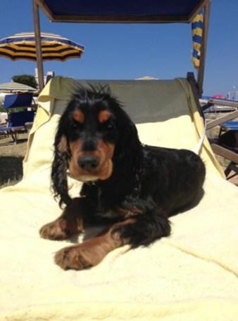 cane in spiaggia, vacanza con animali