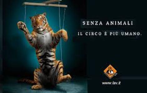 Locandina Lav su animali nel circo