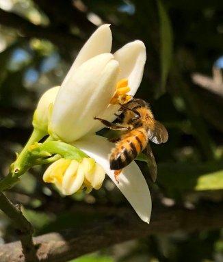 api rischio