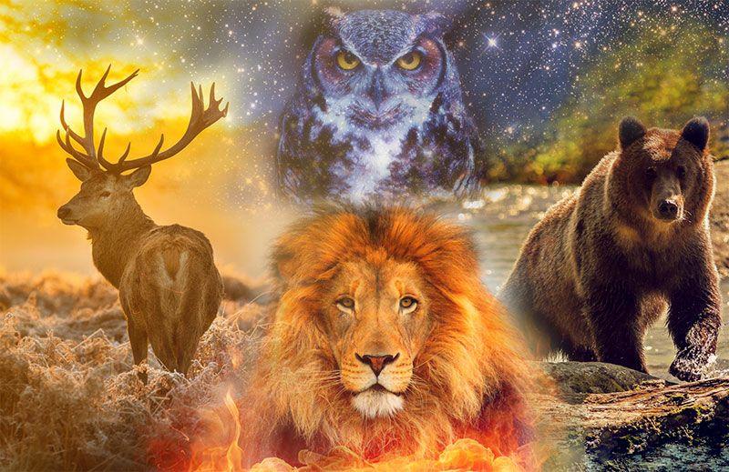 Corso base di sciamanesimo: incontra il tuo animale guida