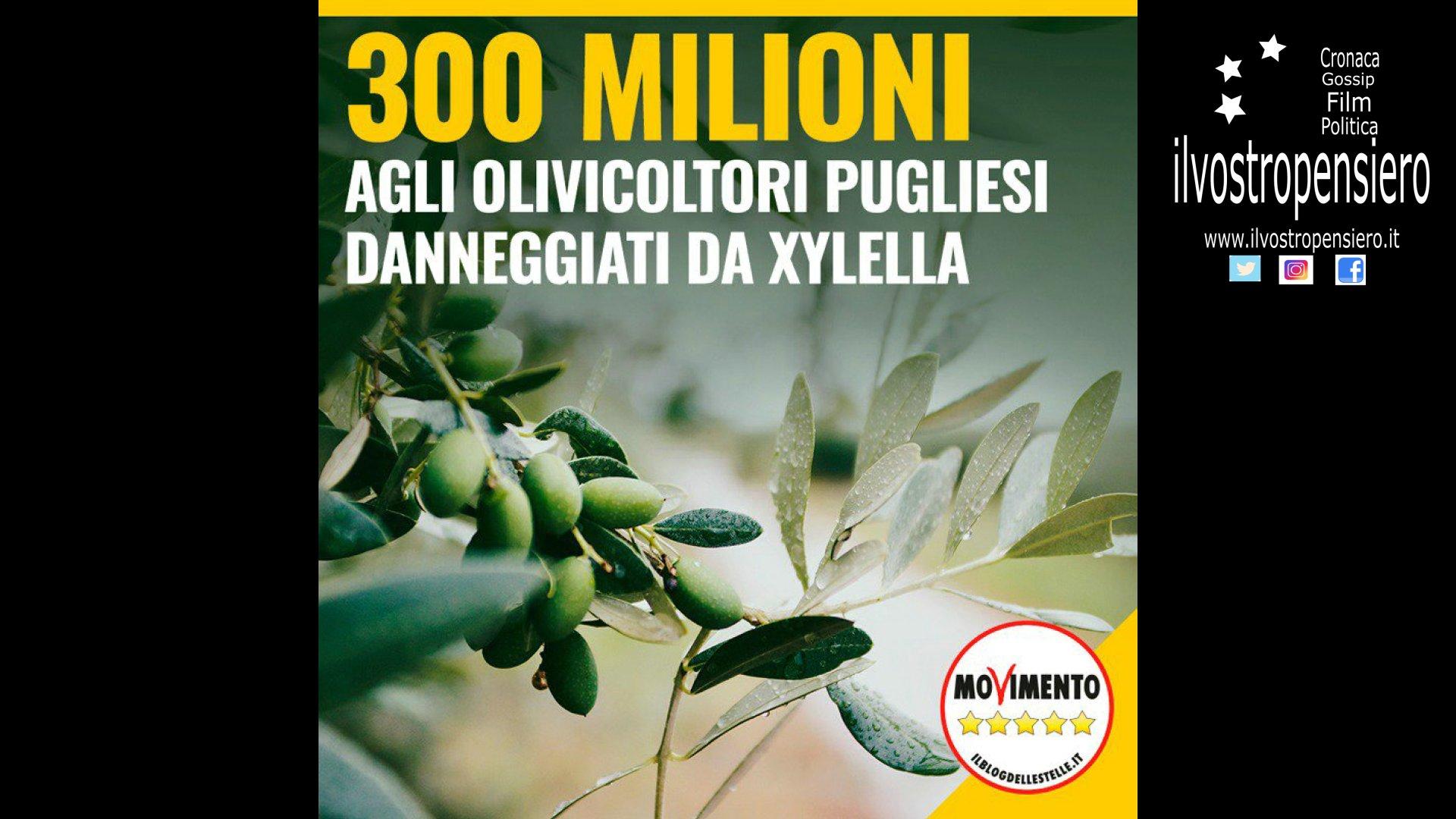 Movimento 5 stelle: 300 milioni agli agricoltori pugliesi danneggiati dalla xylella