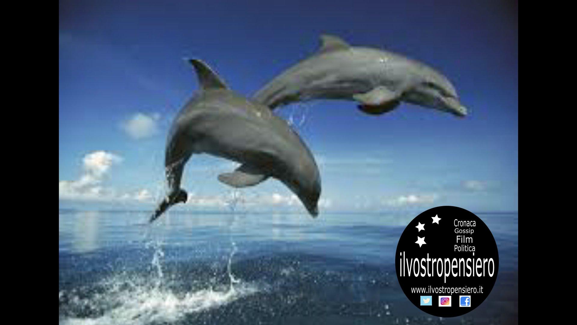 Delfini vicino alla riva del mare nella marina di Andrano (Le) guarda il video