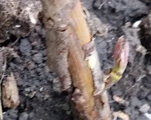 bare-root-6-7-4