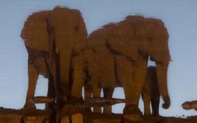 Spiegelbeeld van olifanten in Moringa waterhole Halali in Etosha NP Namibië