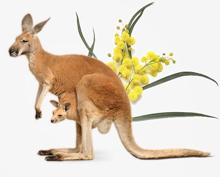 heads n tails - Kangaroo and wattle