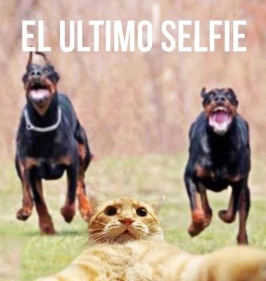 imagenes chistosas para descargar al celular 6