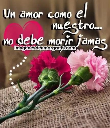 imagenes de amor con flores y frases