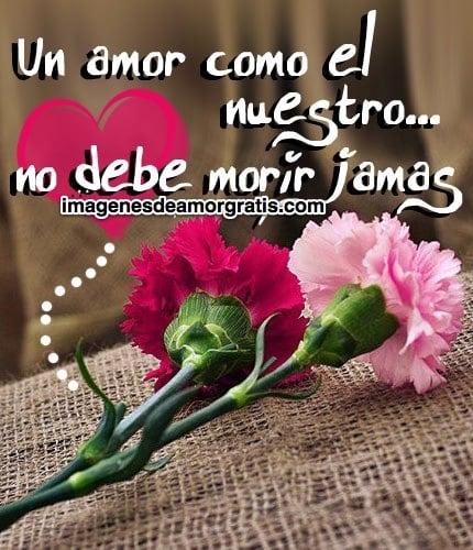Imágenes De Amor Con Flores Y Frases