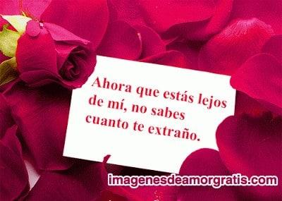 imagenes de amor con rosas