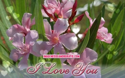 imagenes de i love you con flores