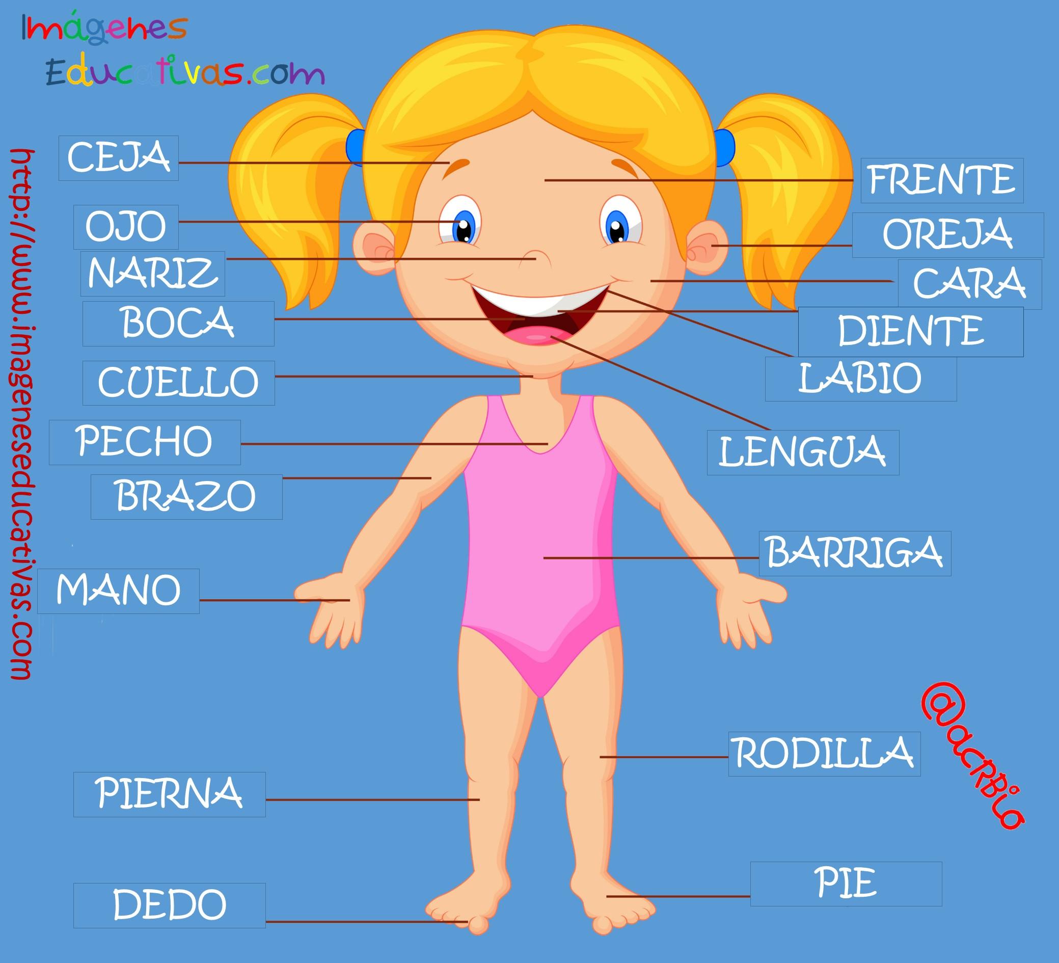 Partes del cuerpo en Castellano (1) - Imagenes Educativas