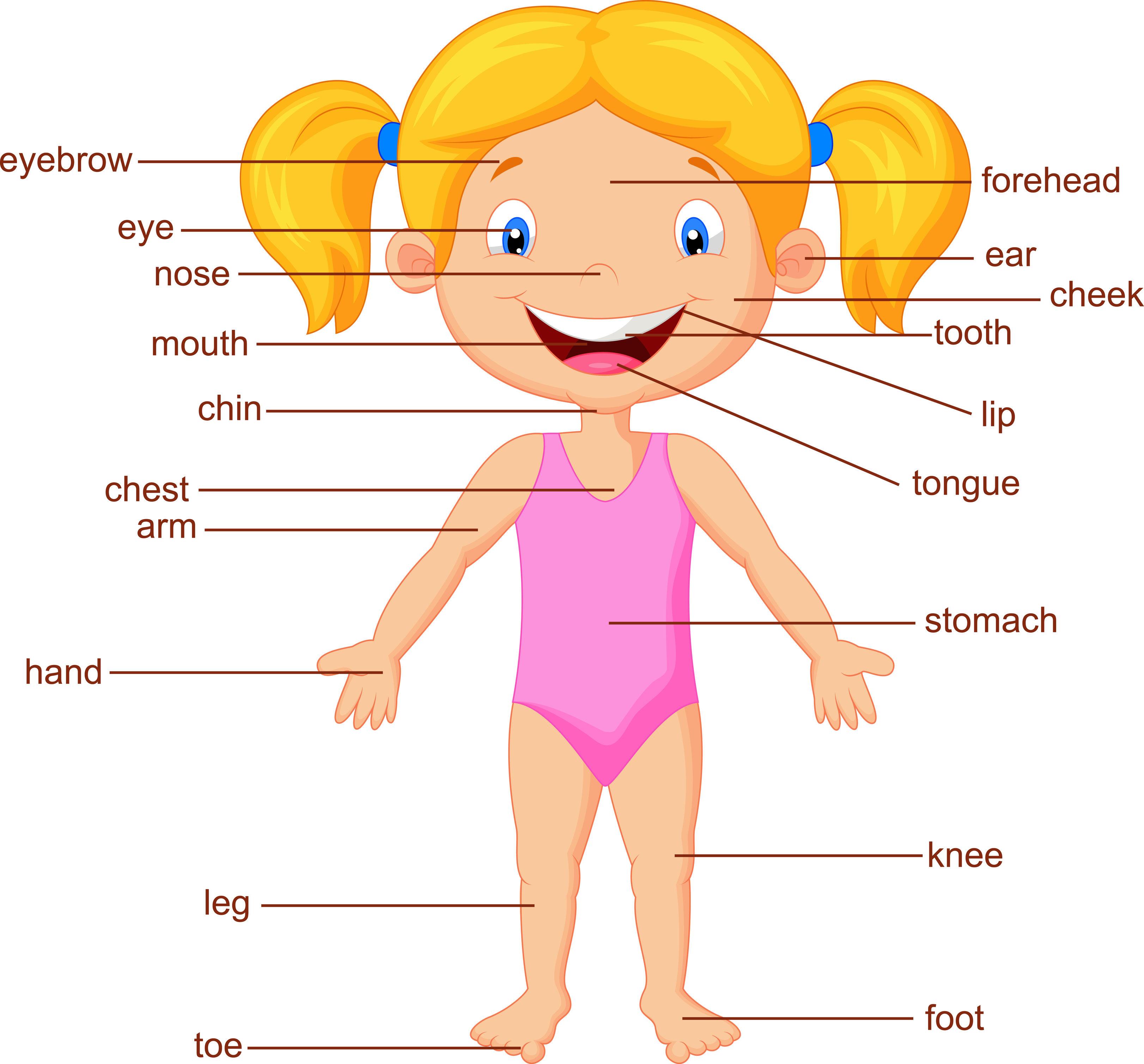 Poster para niños y niñas con las partes del cuerpo en inglés ...