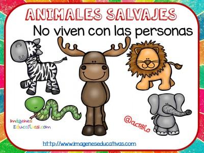 Tipos de animales claseficación (5)