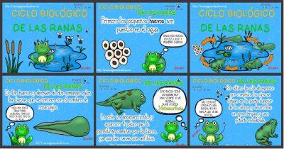 Ciclo biológico de las ranas para niños PORTADA