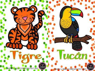 Tarjetas De Animales De Zoológico Y Hábitats (4)
