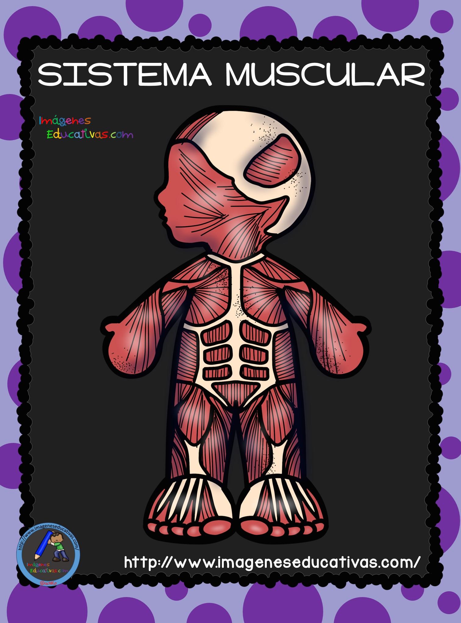 Fichas de Primaria: Sistemas del cuerpo humano