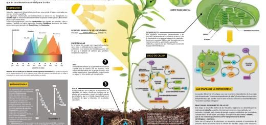 fotosíntesis Archivos - Imagenes Educativas