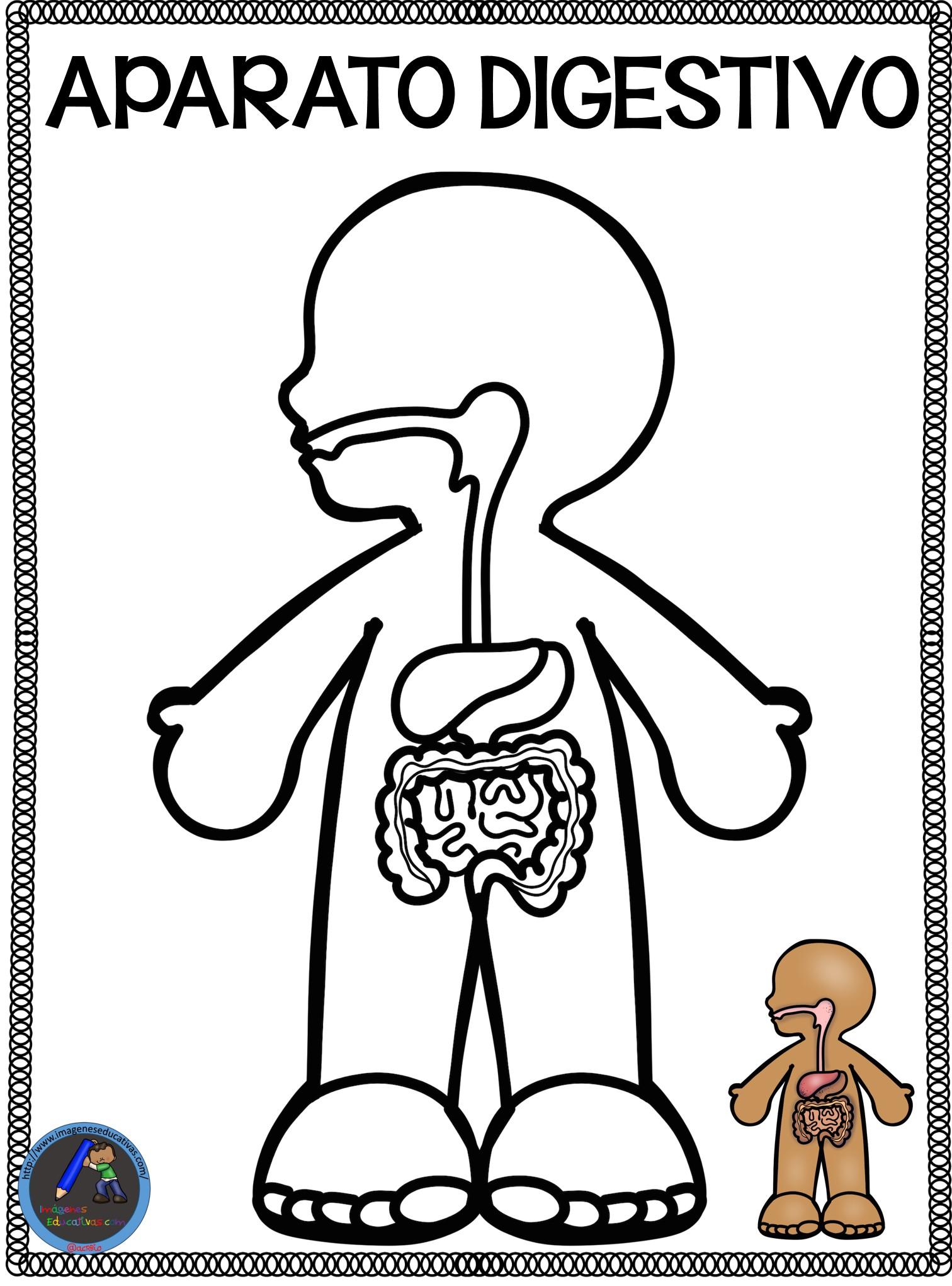 Cuaderno Para Colorear El Cuerpo Humano 3 Imagenes Educativas