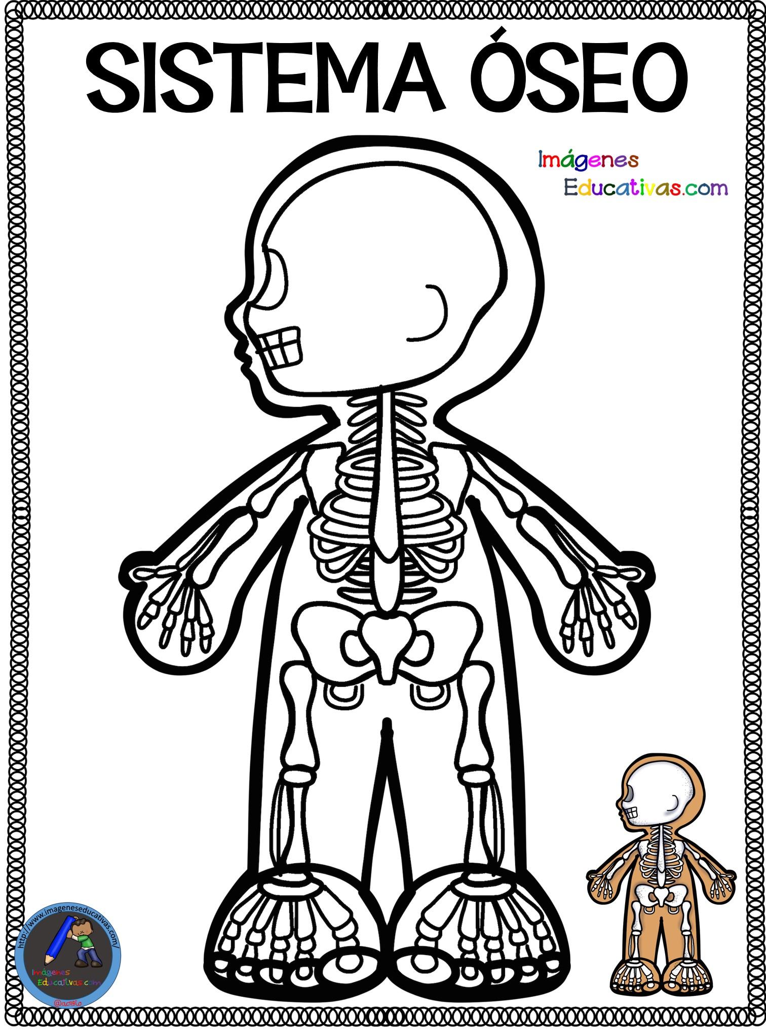 Cuaderno Para Colorear El Cuerpo Humano 9 Imagenes Educativas