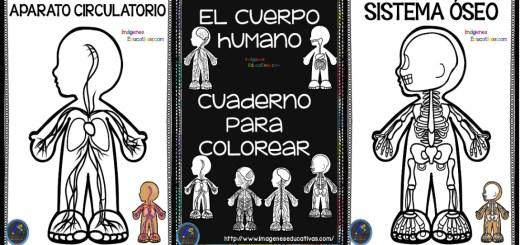 Cuerpo Humano Archivos Imagenes Educativas