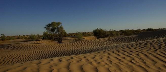 Le désert entre Douz et Ksar Ghilane - Tunisie 2009