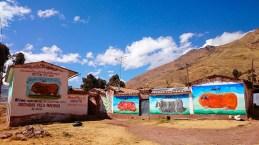 Elevage de Cuy sur l'altiplano, choisissez le vôtre ! Pérou - 2014