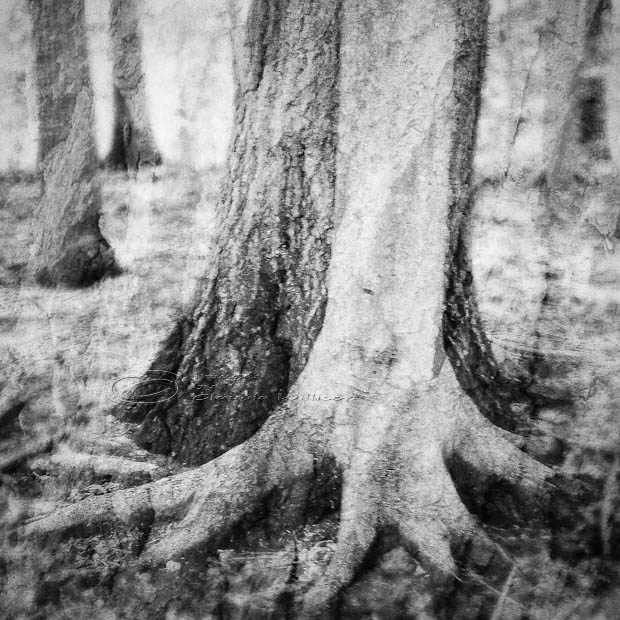 trees, together, tree hugger, texture