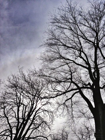 trees, sky, iphone