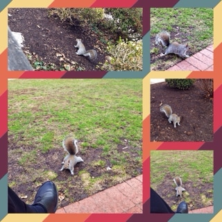 Squirrel, iPhone