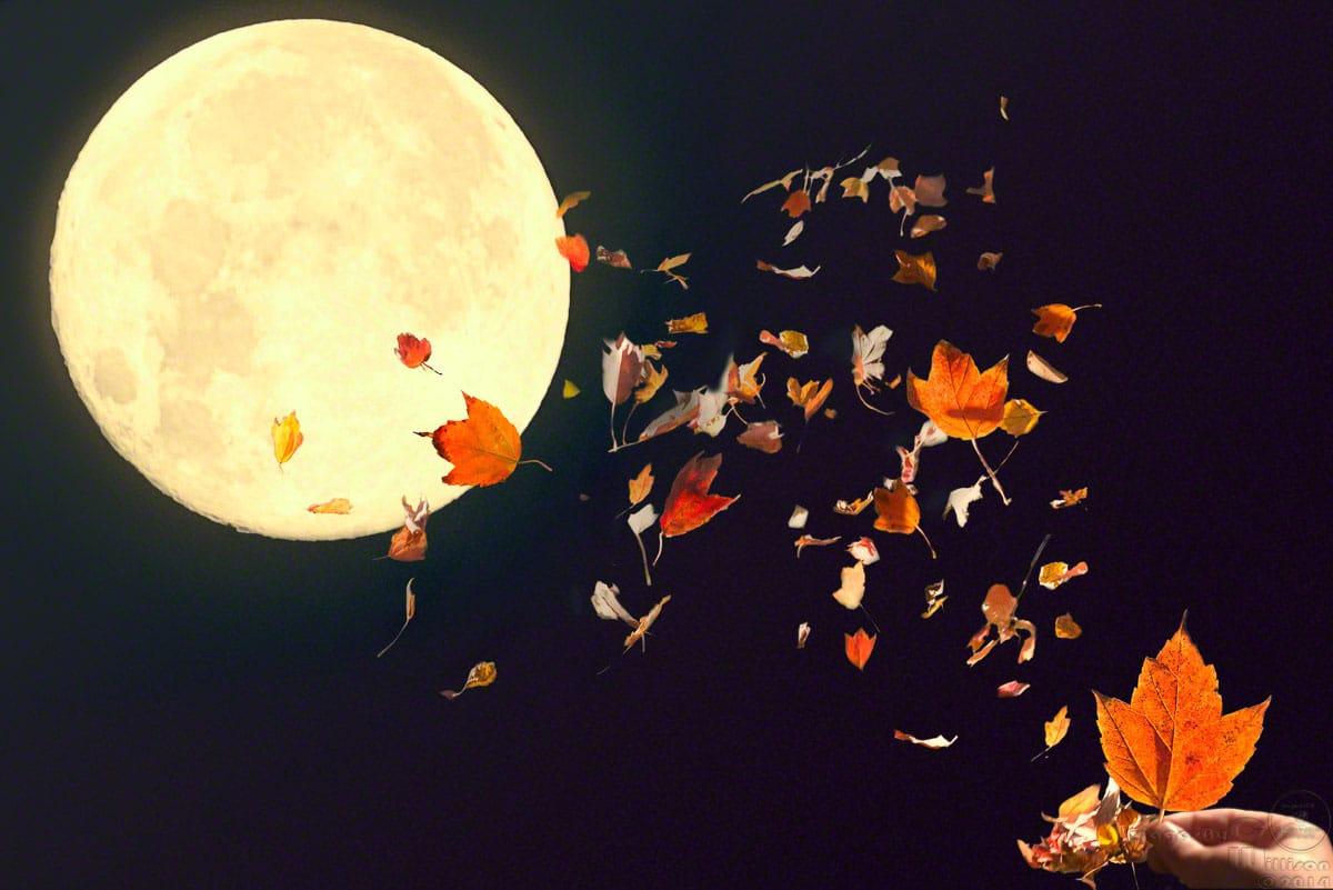 dream, flying, moon, full leaves