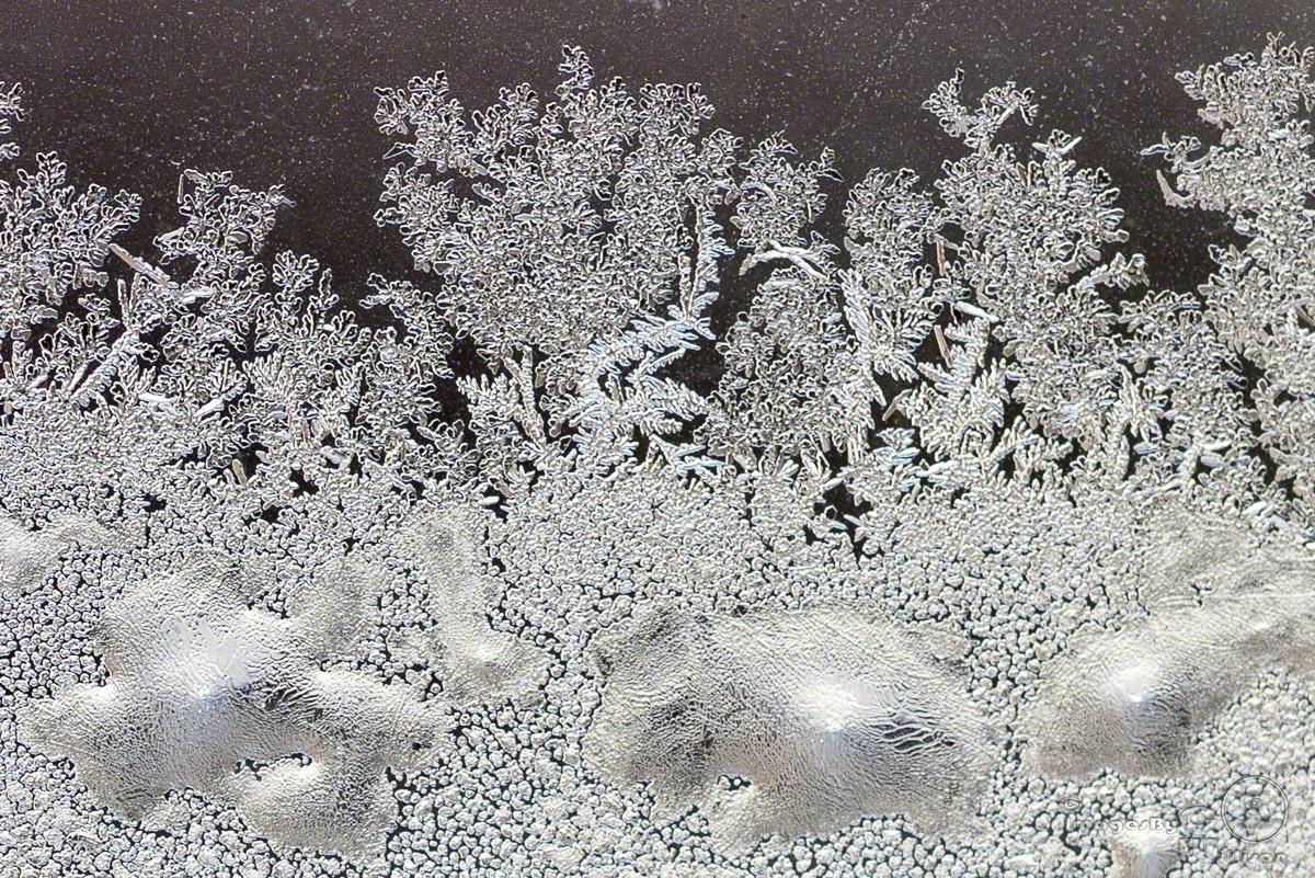 ice, flowers, window